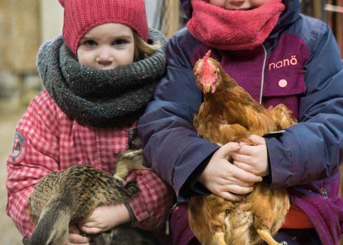 Petites poulettes_format carré