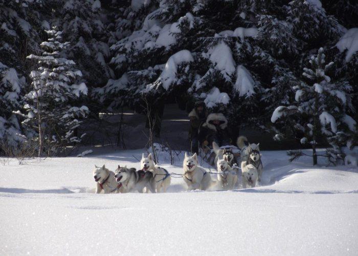 photos chiens Mohigan